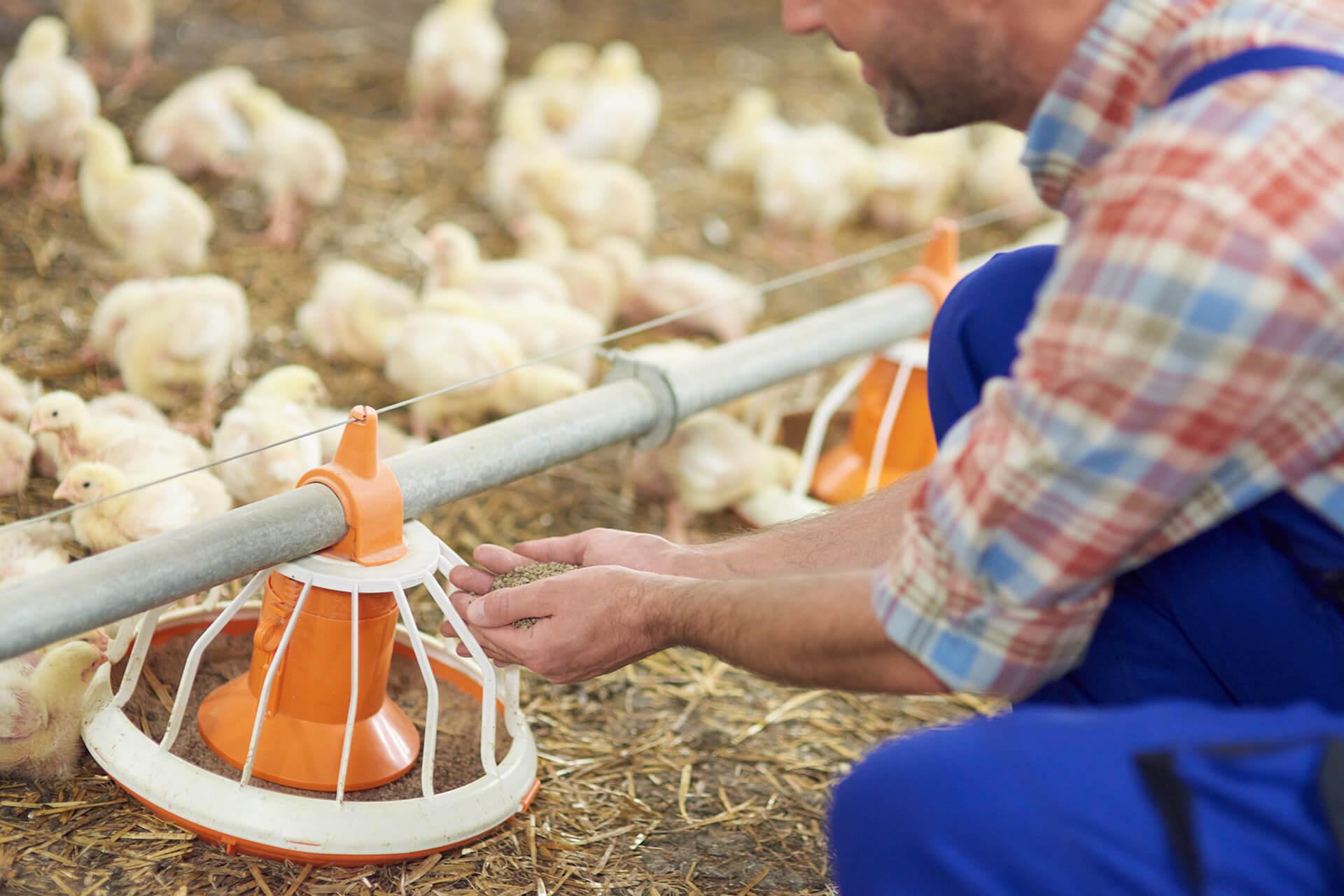 Integrated Chicken & Egg Production